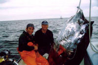 900lb Bluefin Tuna